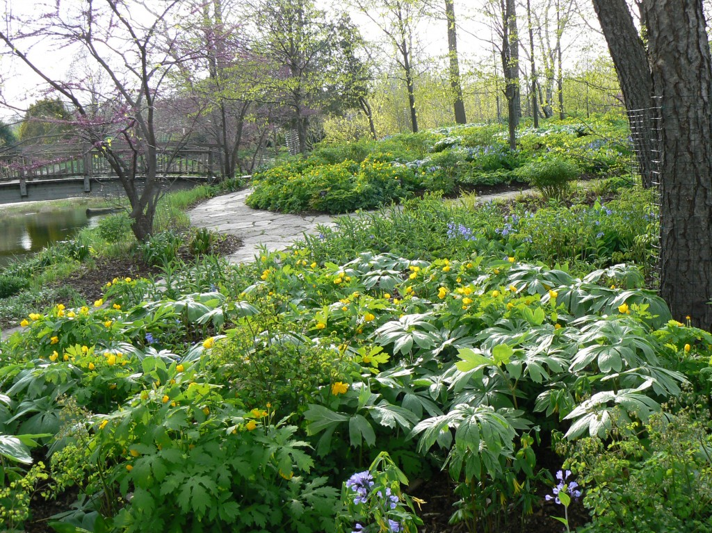 Spectacular Spring Ephemerals In Landscapes Around Madison Wisconsin Avant Gardening Avant