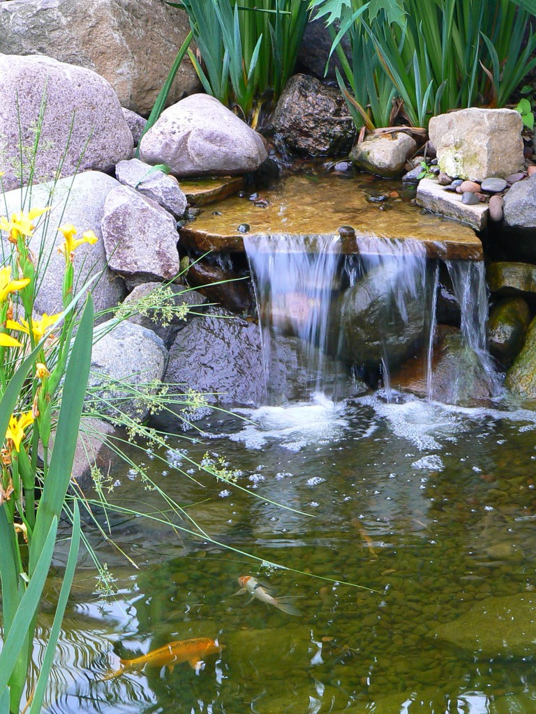 Do you know how to clean your pond avant gardening for How to clean a fish pond