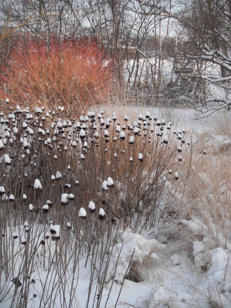 Your Wisconsin Landscape Amp Garden Checklist January